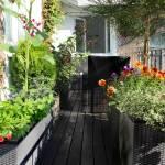 aménagement d'un potager sur balcon Noisy-Le-Grand (93)