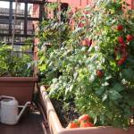 Aménager un potager sur un balcon à Paris 15